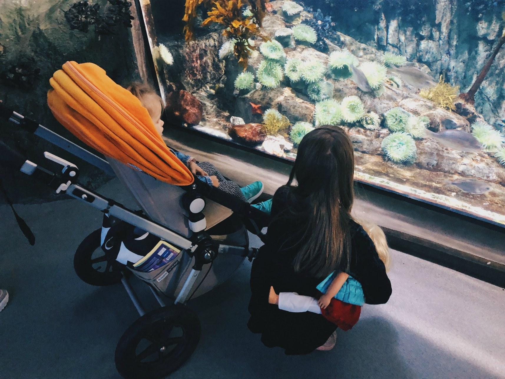 aquarium_rattaat.jpg