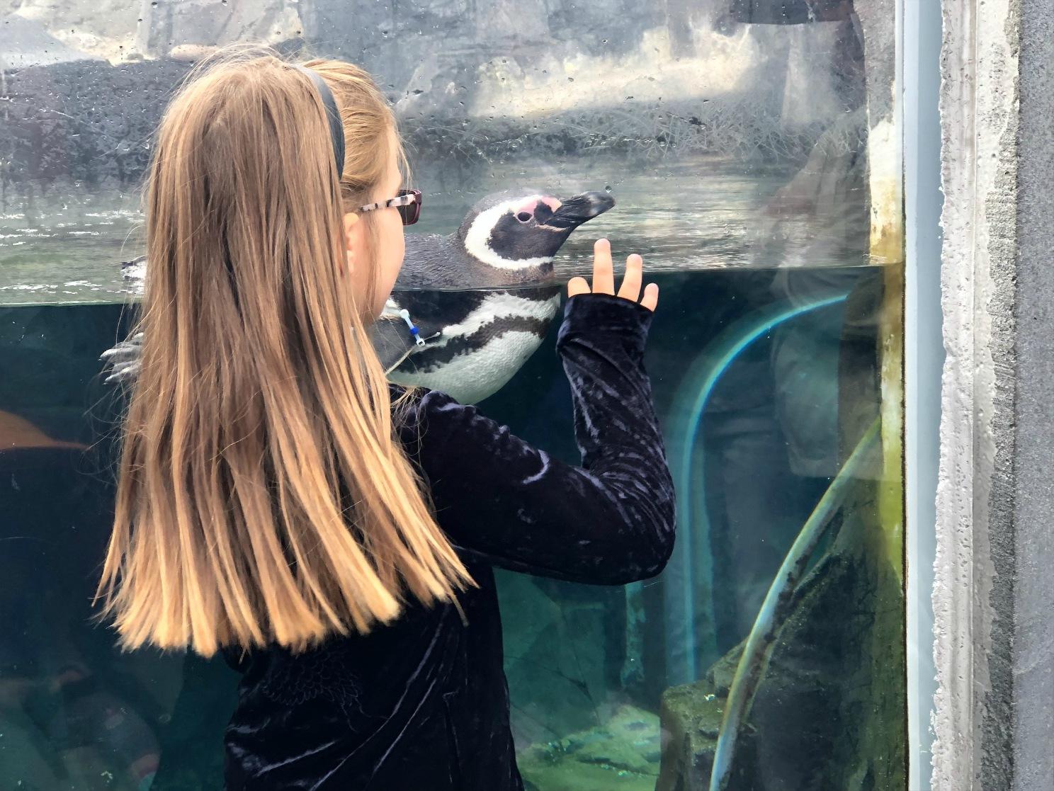 akvaario_pingviini.jpg