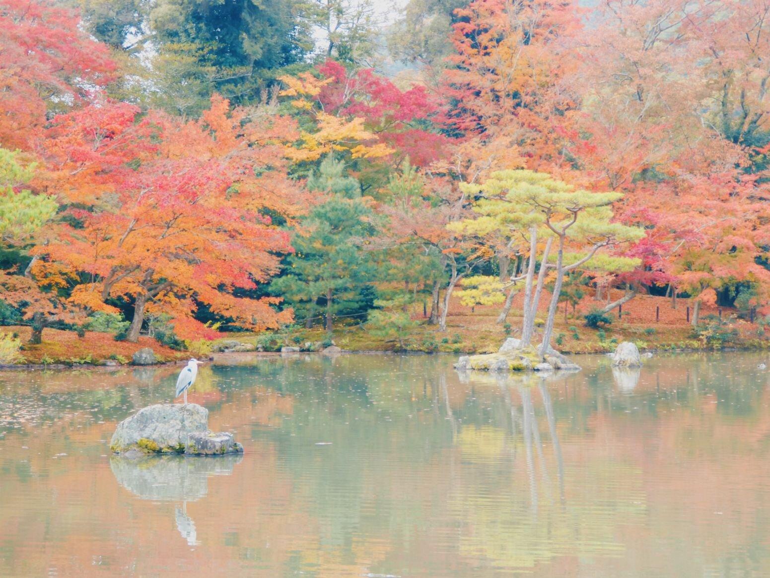 japan_stork.jpg