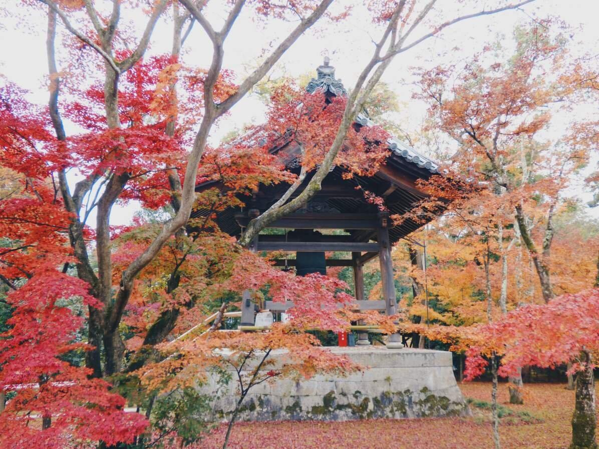 japan_foliage.jpg