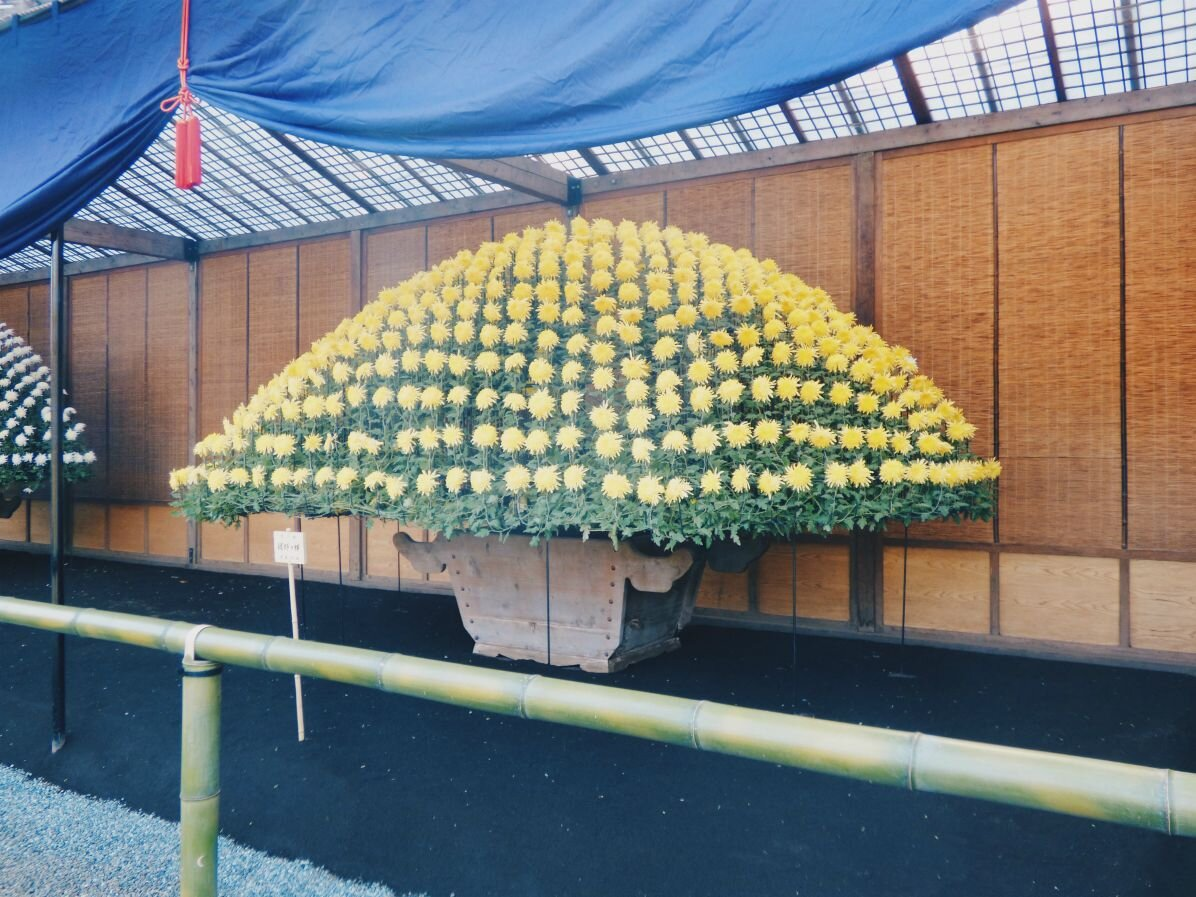 japan_flowers.jpg