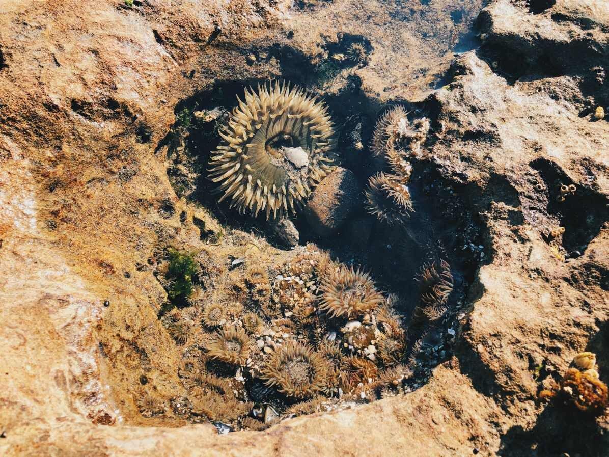 Merivuokkoja rantakallioilla