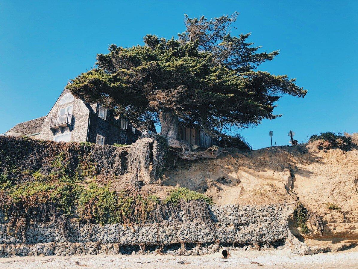 Tämä puu taitaa tippua hetkenä minä hyvänsä.