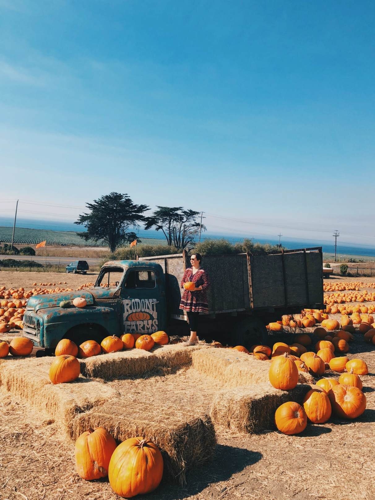 rodoni_farms_pumpkin_patch.jpg