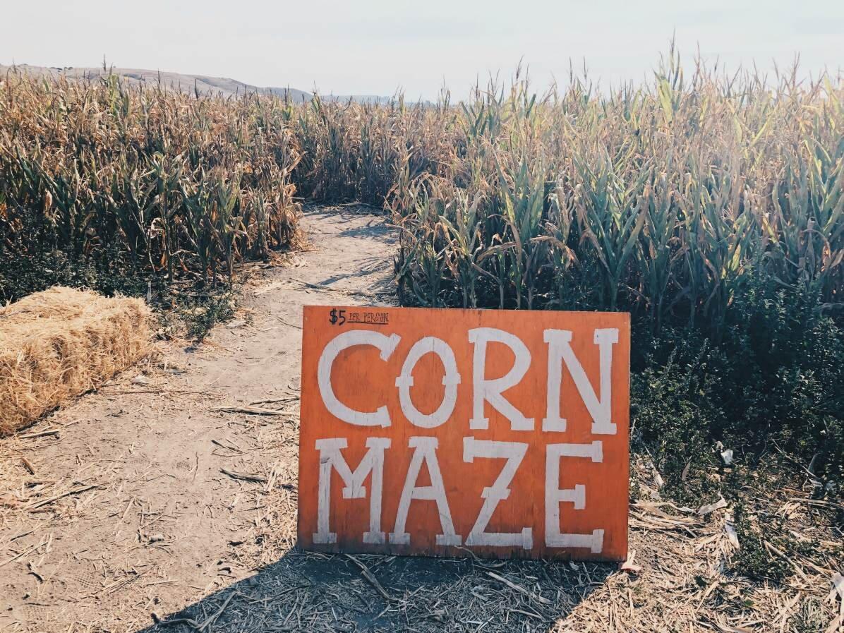 rodoni_farm_corn_maze.jpg