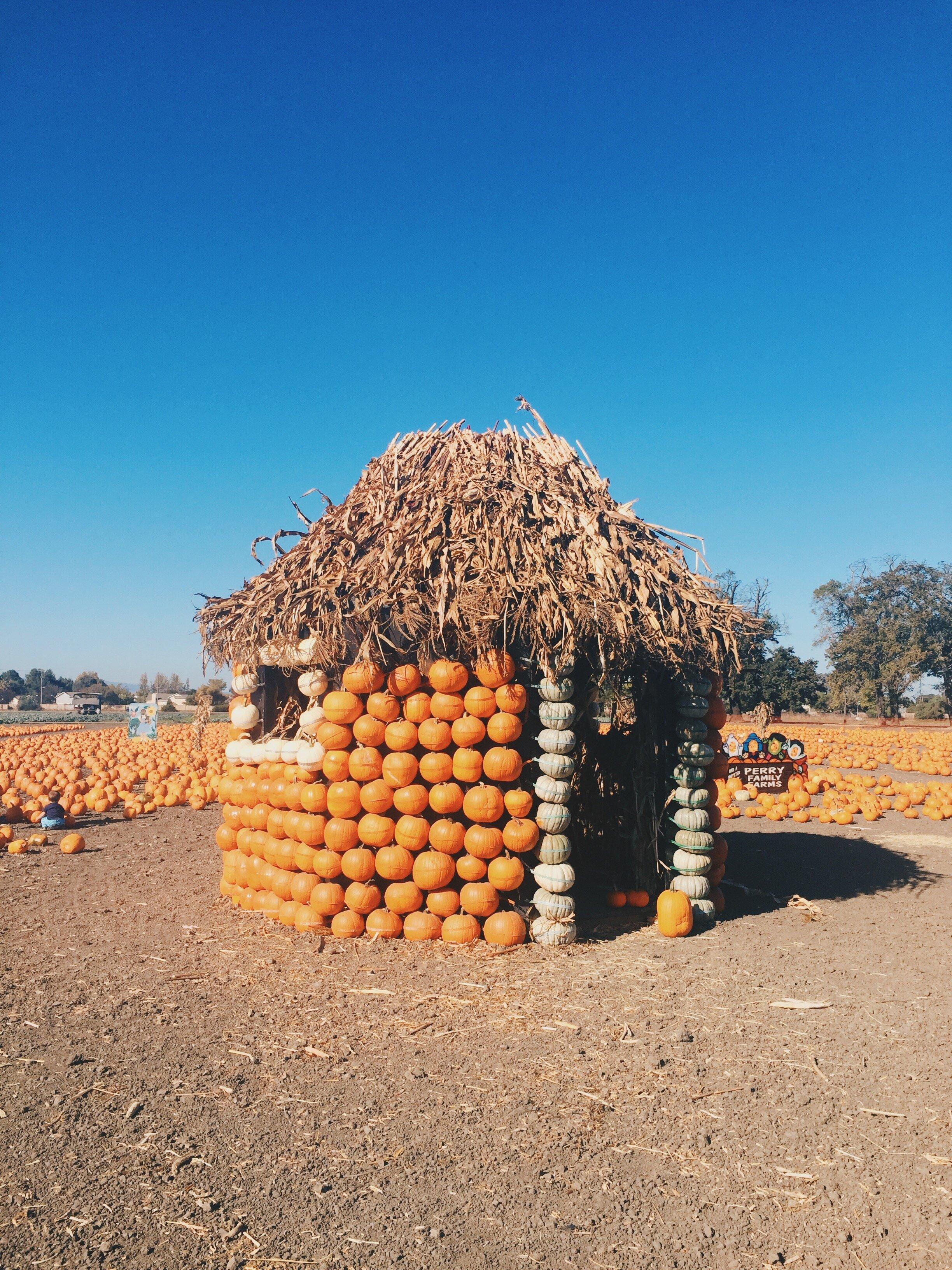 Pumpkin house at J.E. Perry Farm