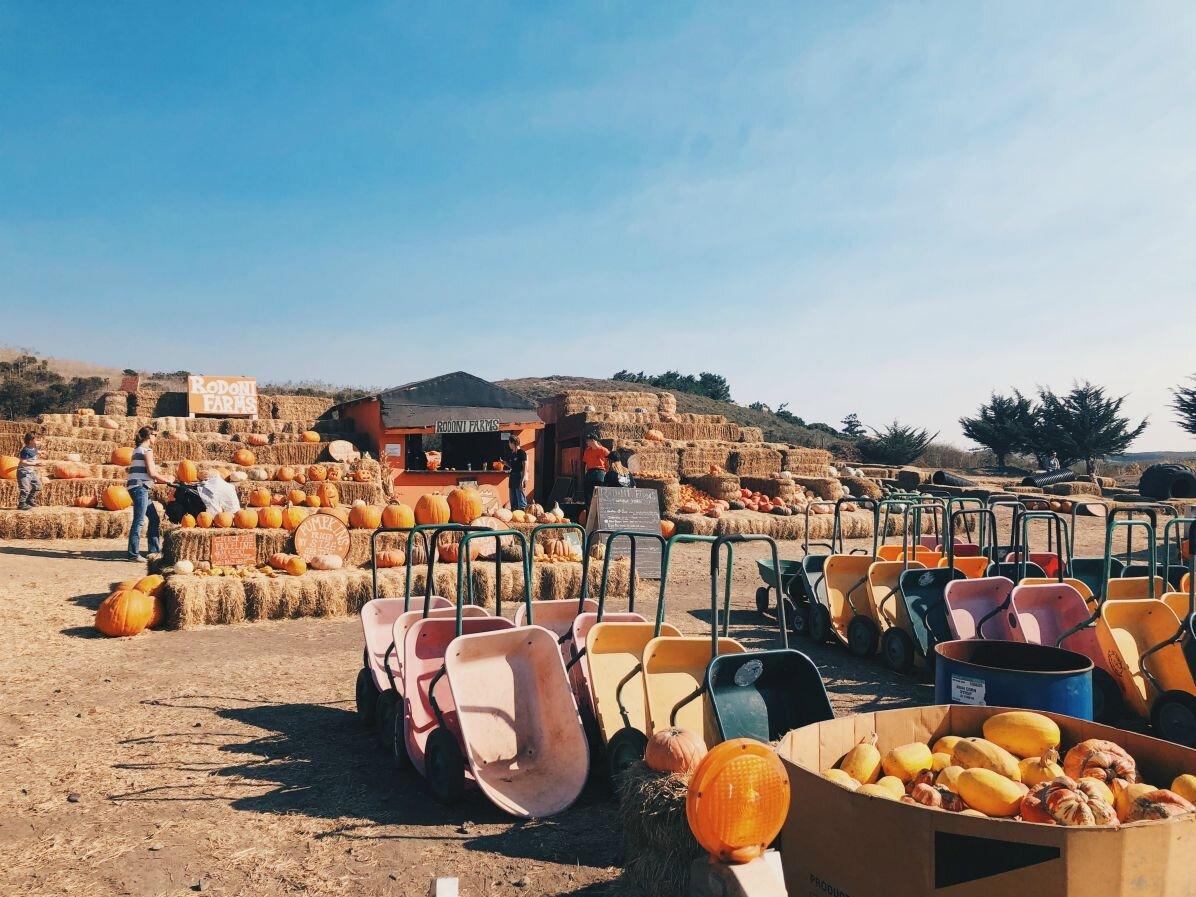Rodoni Farm in Santa Cruz