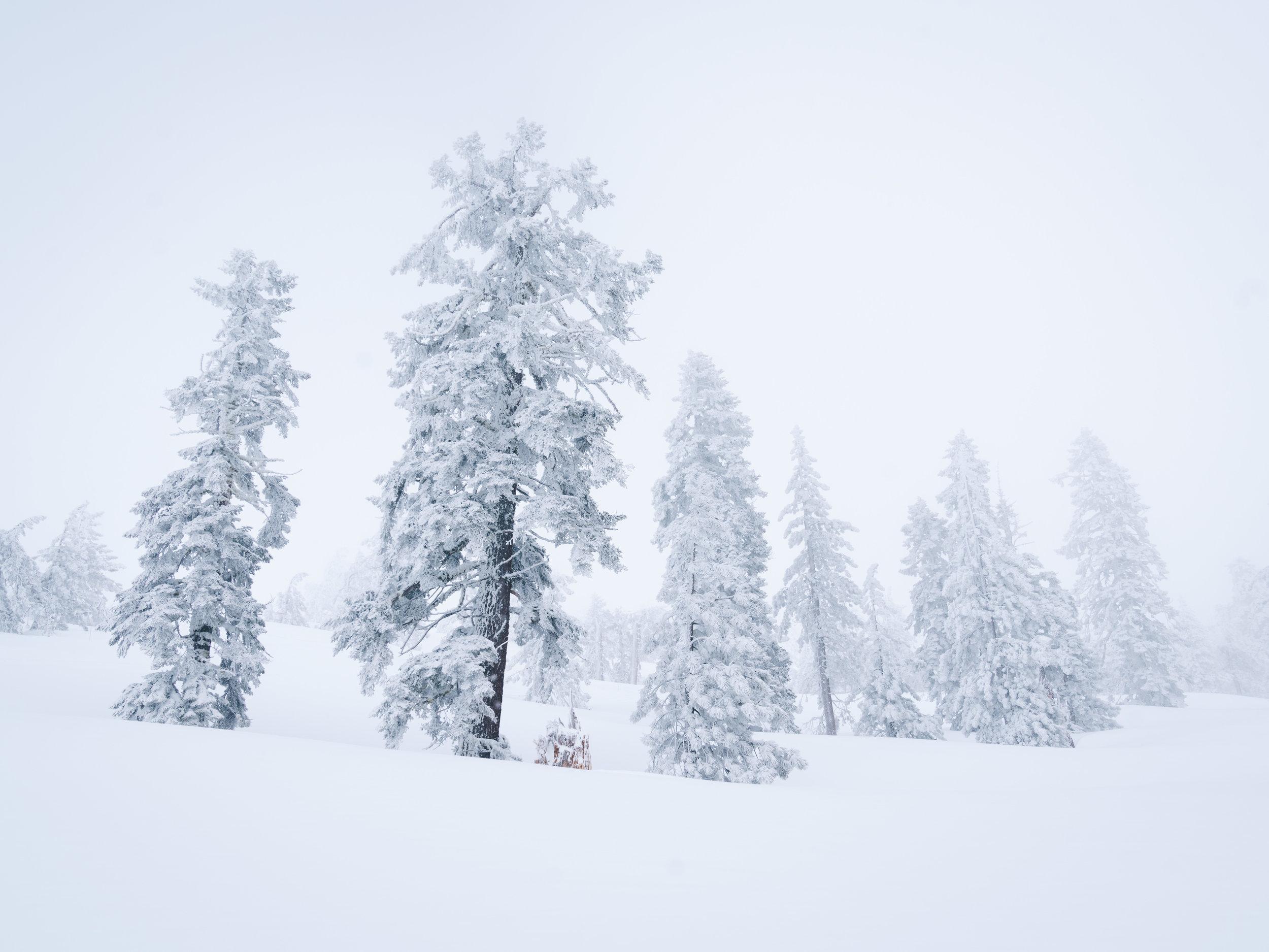 Tahoe_Snowfall.jpg