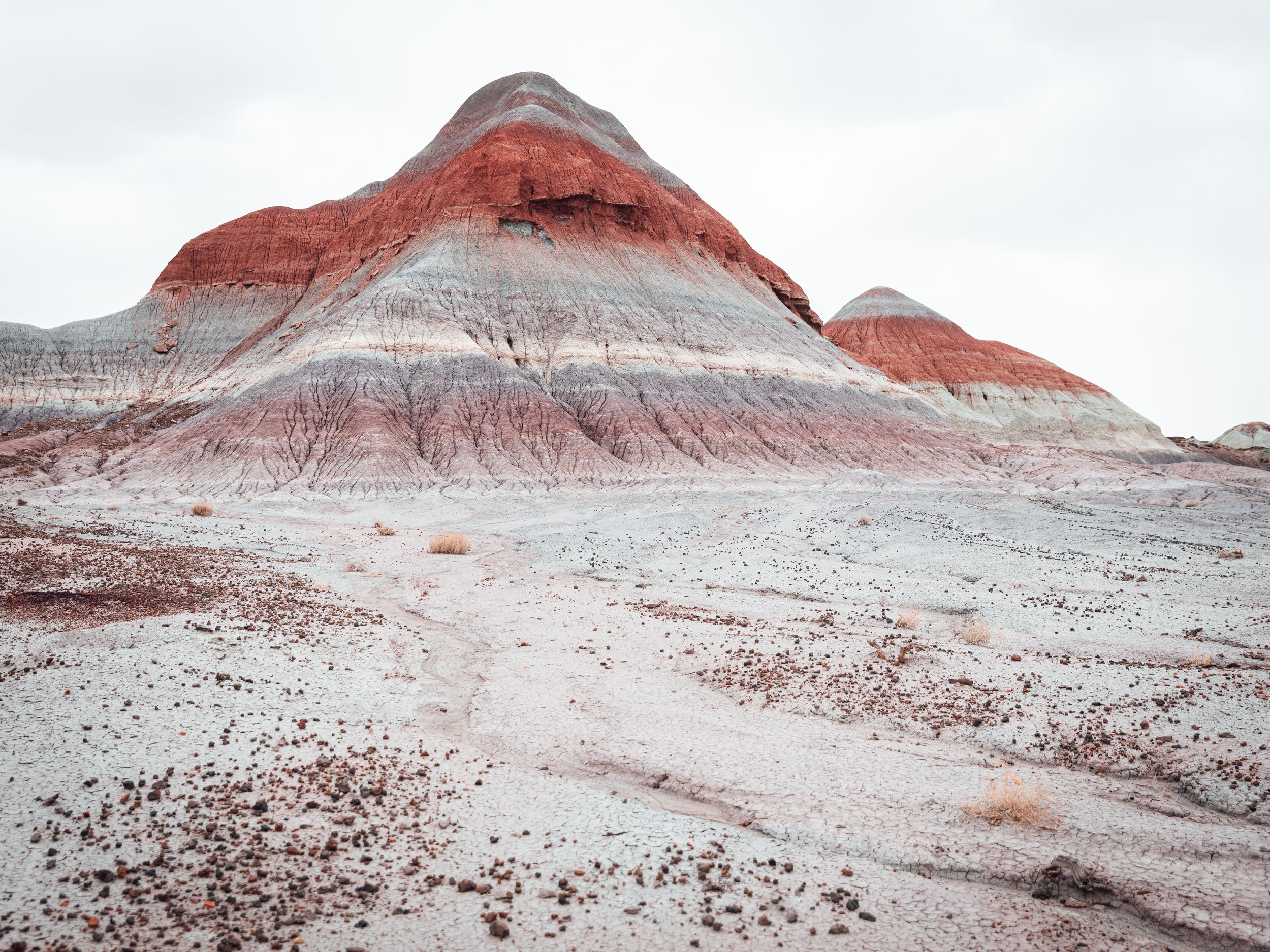 PetrifiedForest_1.jpg