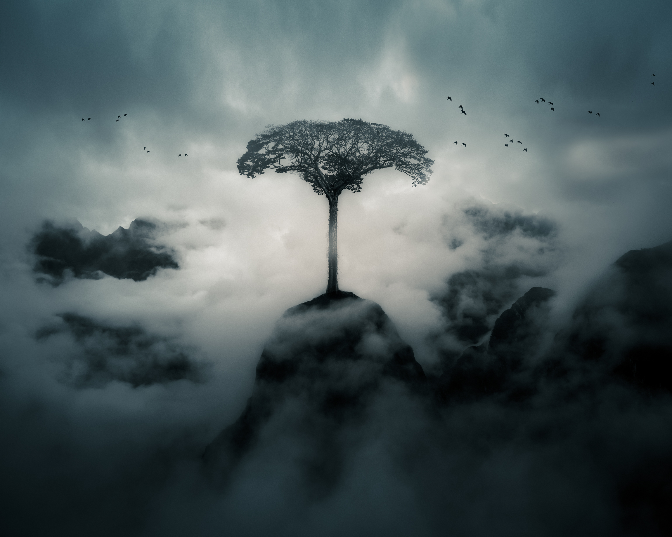 Creative Category - A composite image of Machu Picchu, a tree from the Amazon and some birds from regional Peru.