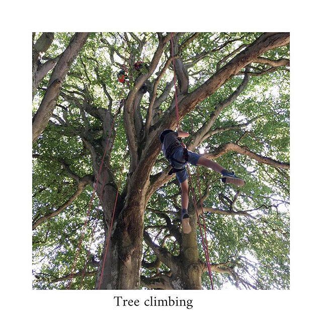 Climbing trees 🌳