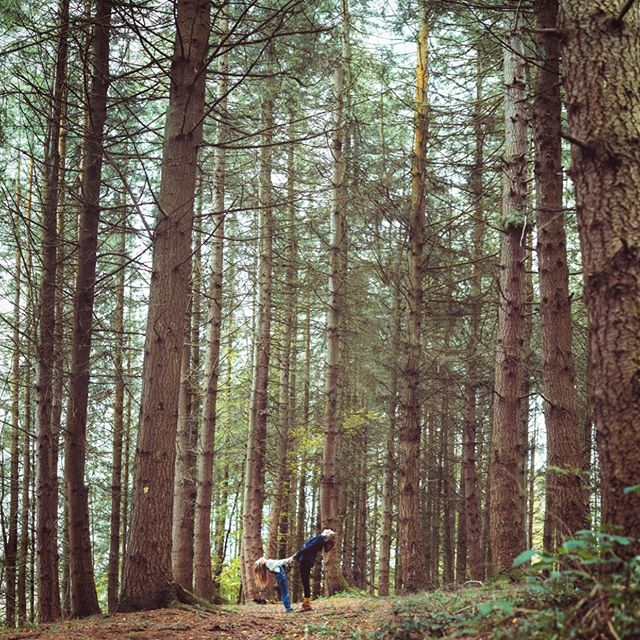 Getting out in amongst the trees and observing the trees, taking time to listen to the trees and working with tree mythology.  Some gentle yoga poses. . Relaxing, calming, improving mental clarity and getting supple at the same time. . Tree Yoga with Bryony Henderson All welcome 🌲🌳🌲🌳🌲🌳🌲 . Photo by @finn . #stayplaydream #fforest #fforestgather #week2