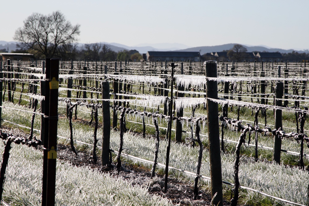 Frost on the Vines, Milawa