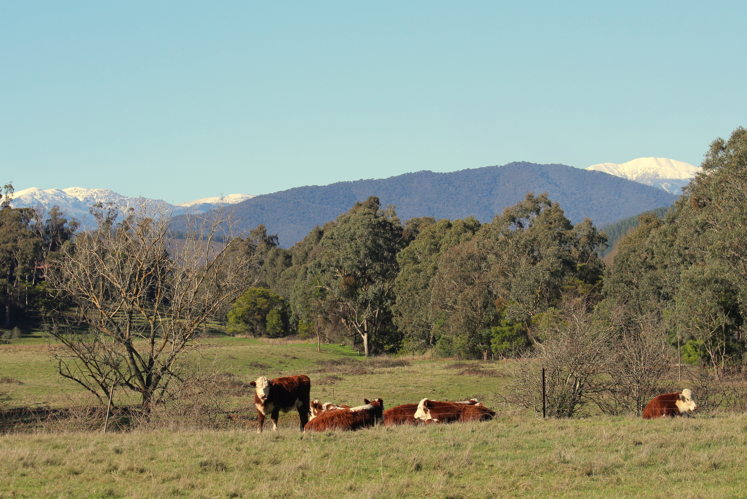 Mounts Fainter & Feathertop