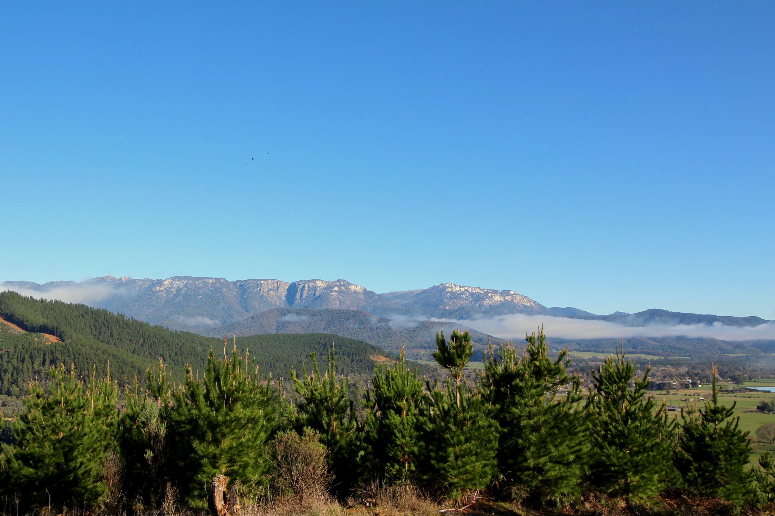 Misty Mount.JPG