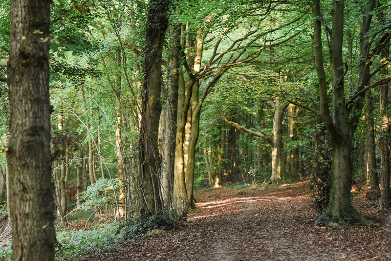 forest-134-DSC_0026.jpg