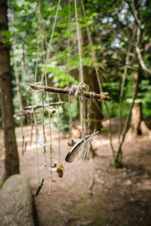 hayley wood-1.jpg