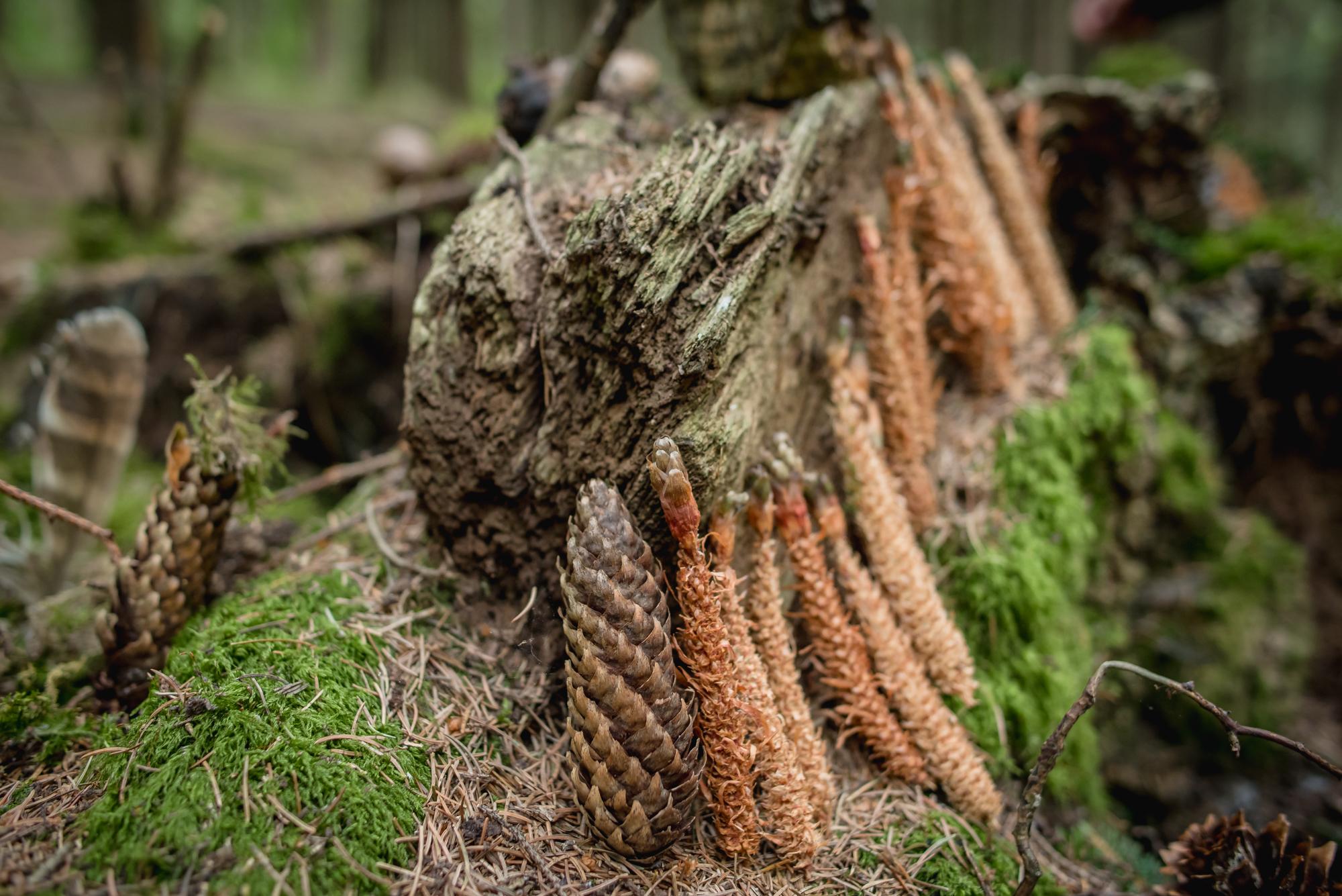 hayley wood-12.jpg