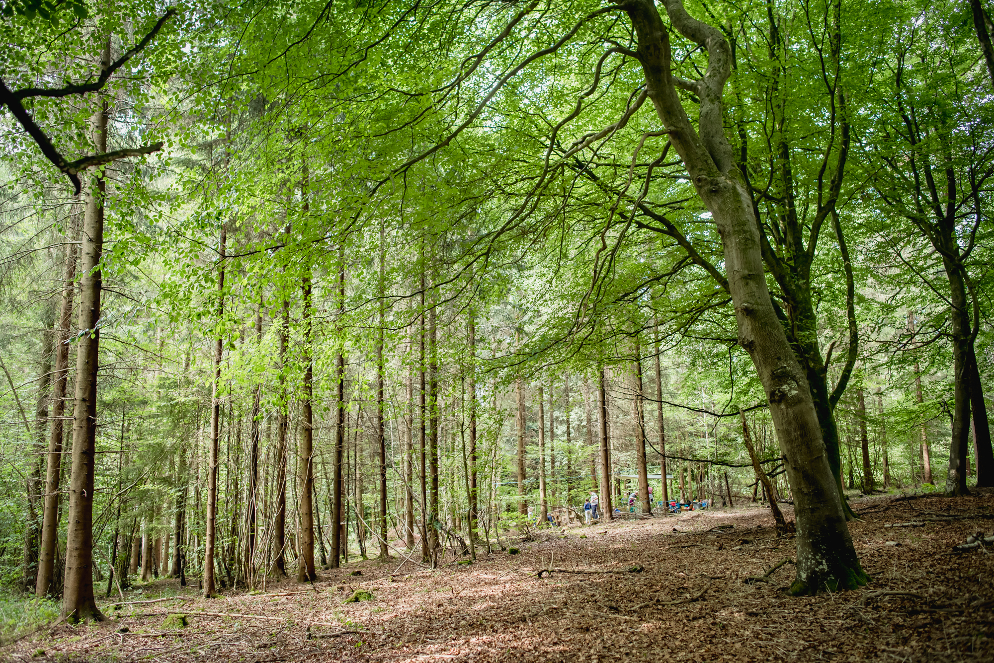 hayley wood-29.jpg