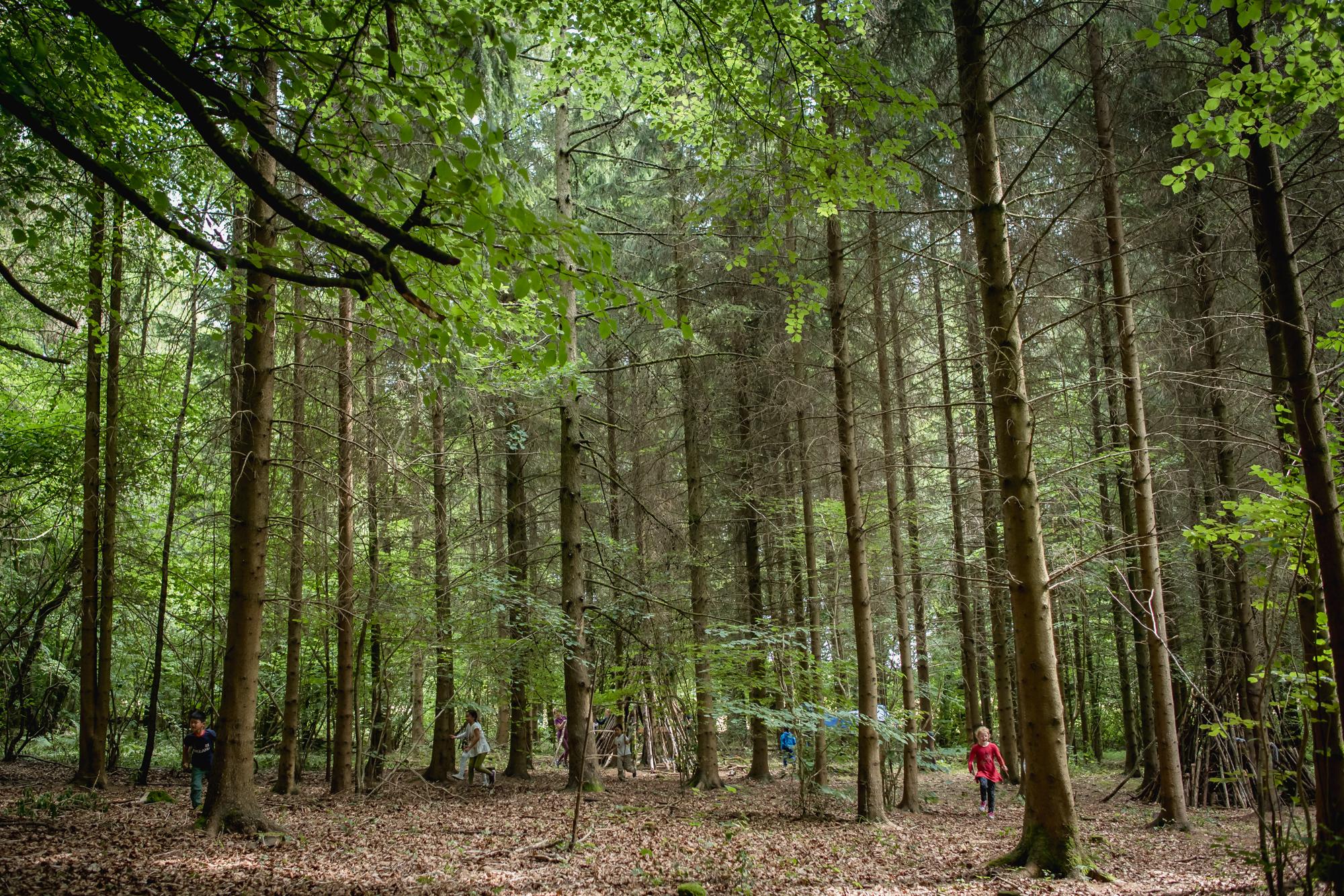 hayley wood-32.jpg