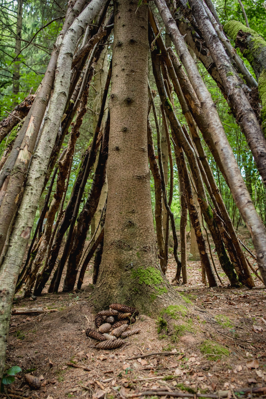 hayley wood-44.jpg