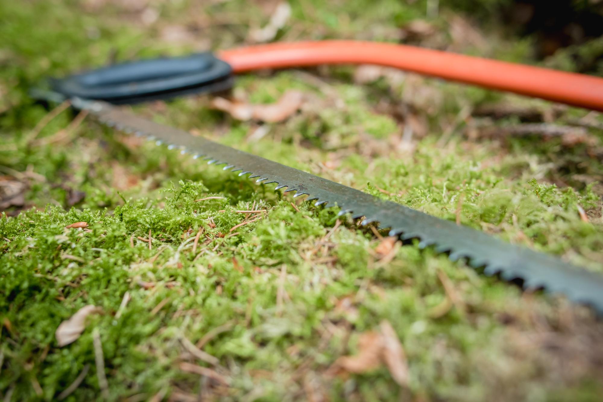 hayley wood-59.jpg