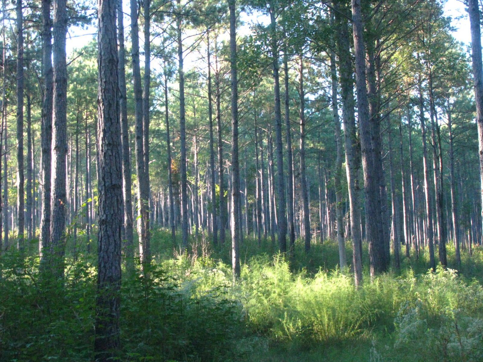 valley wood buys standing timber