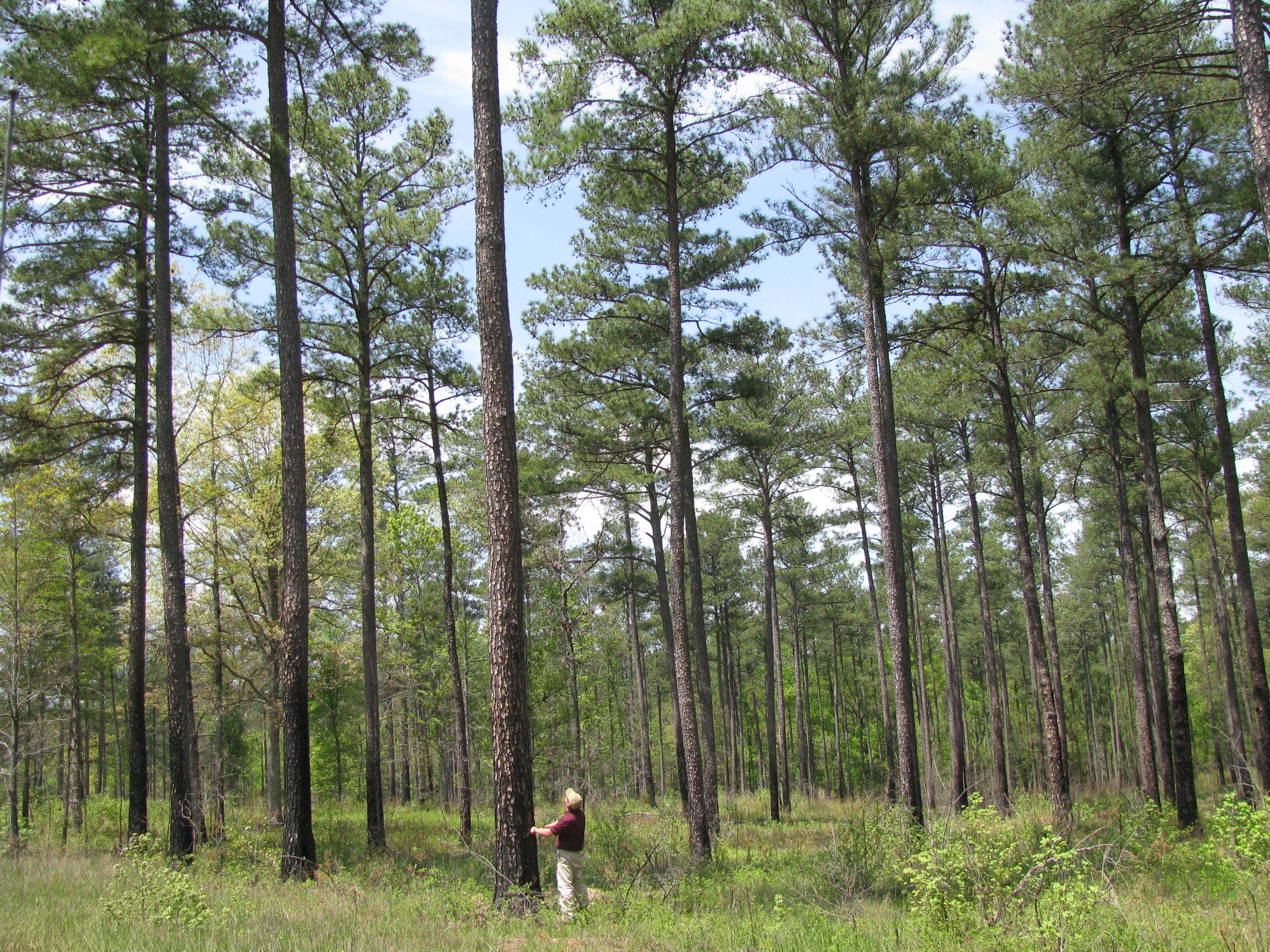 local forester manages land and timber