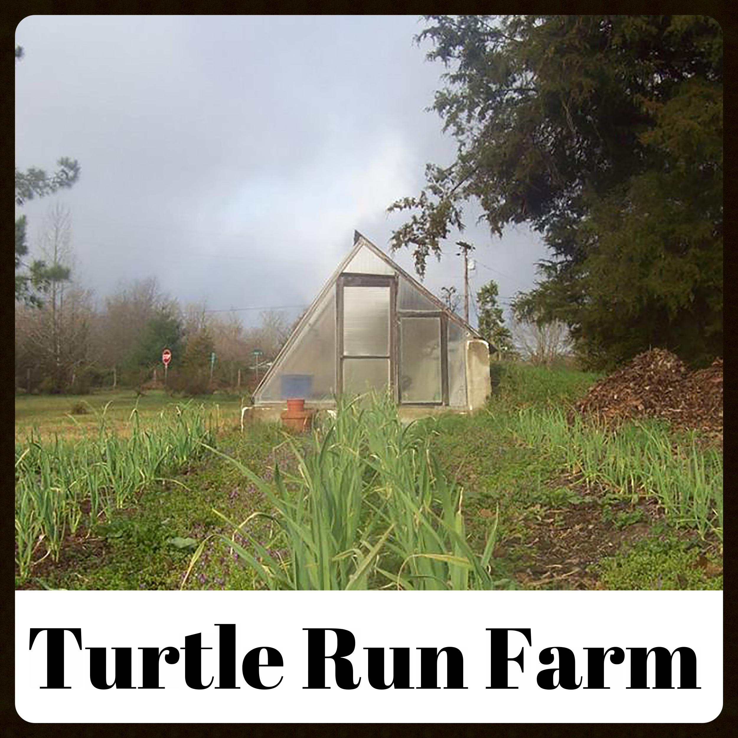 TurtleRun.jpg