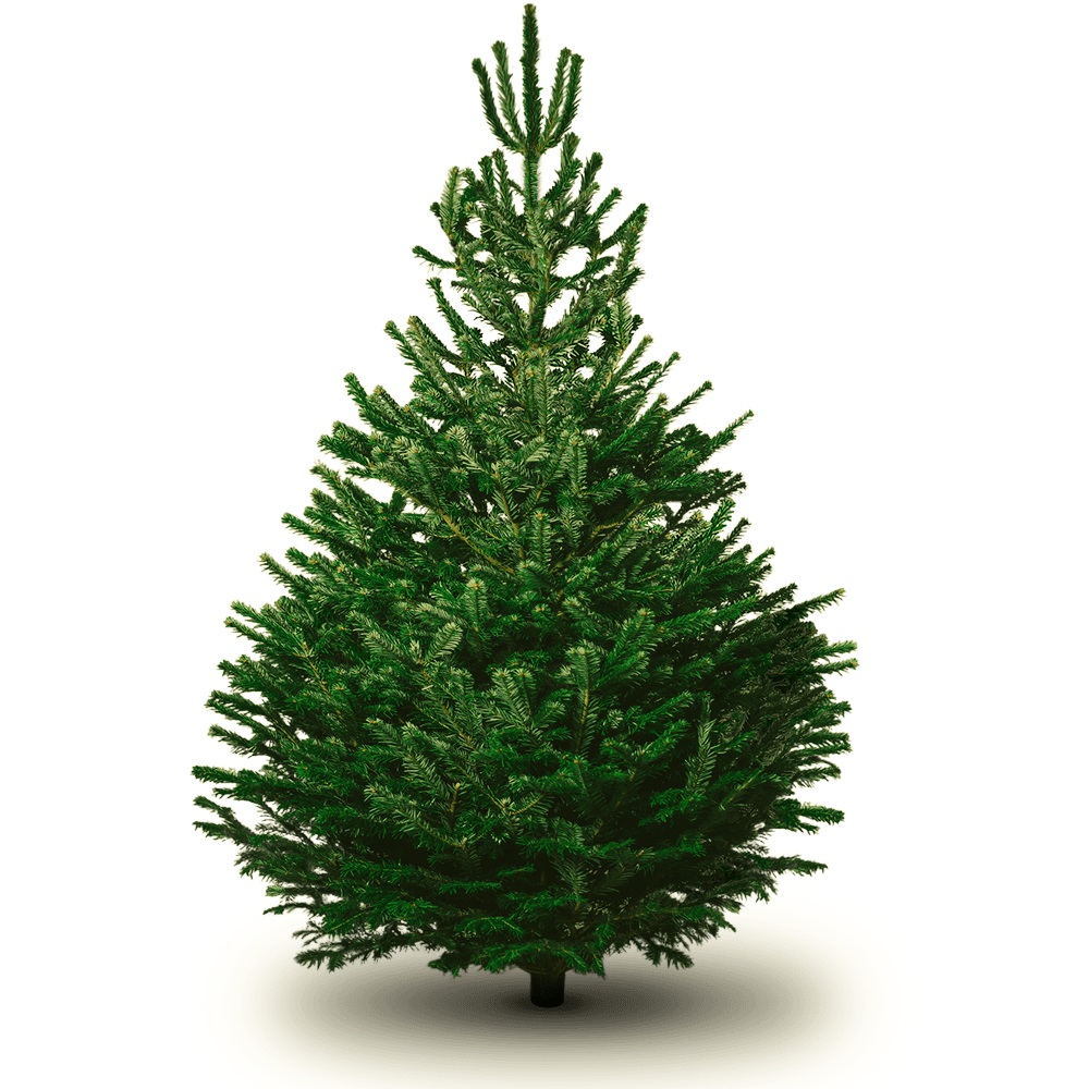 The Real Christmas Tree Farm: Christmas Tree Farms — Plants Galore