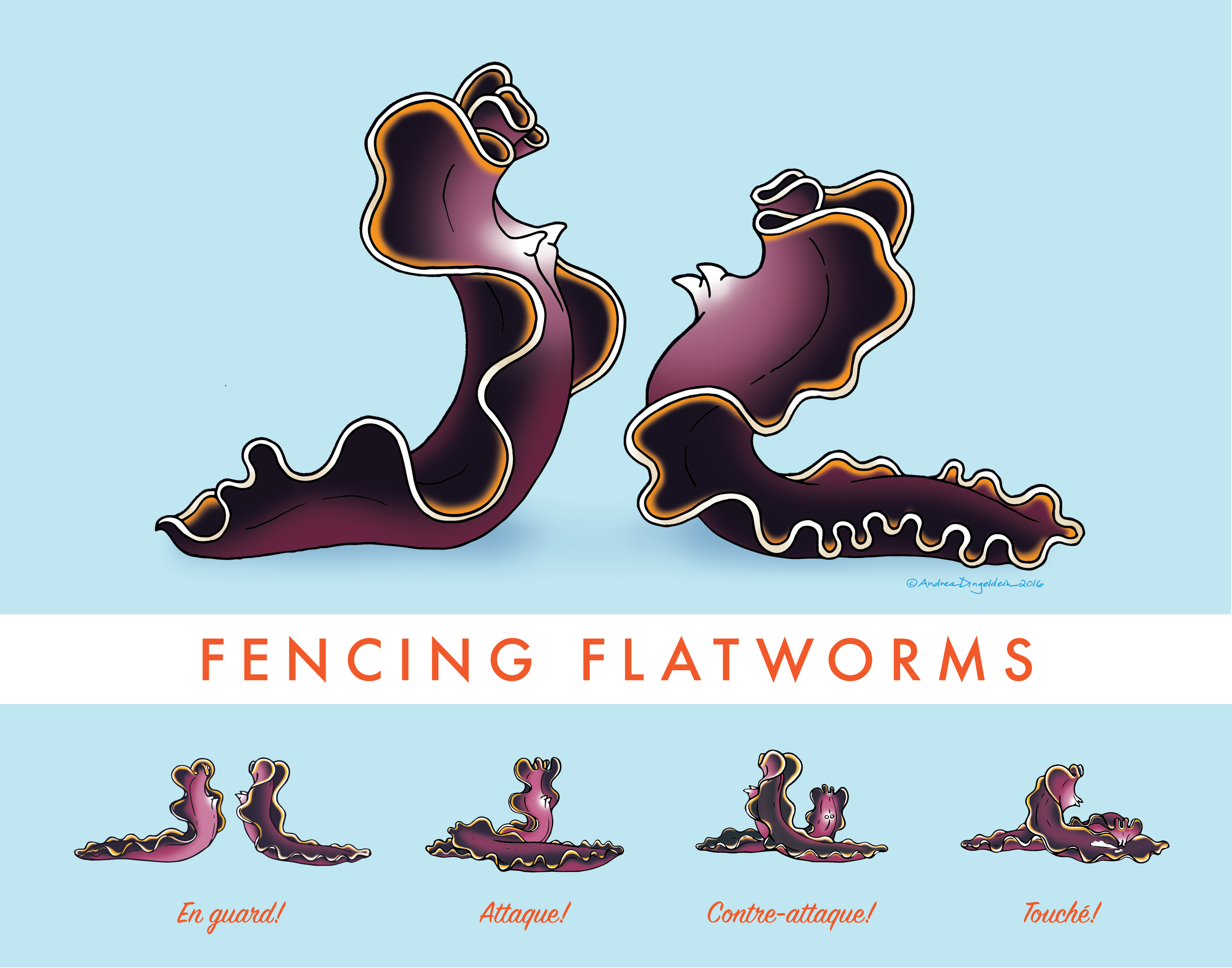 Flatworm Penis Fencing
