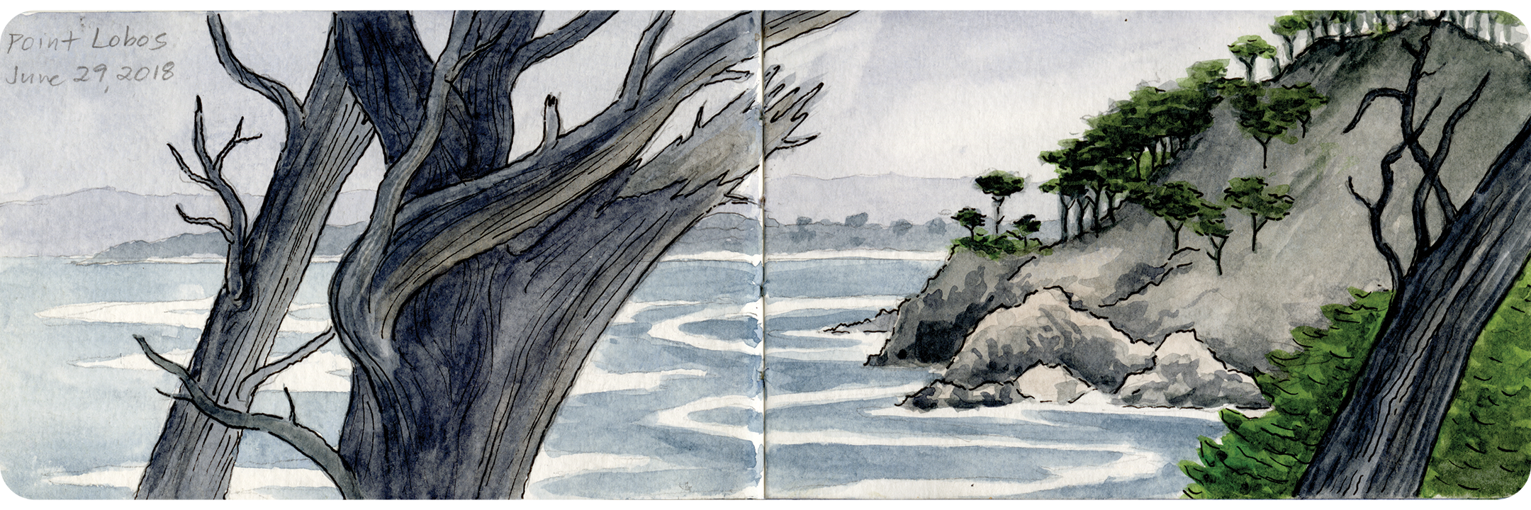 Point_Lobos_Summer.png