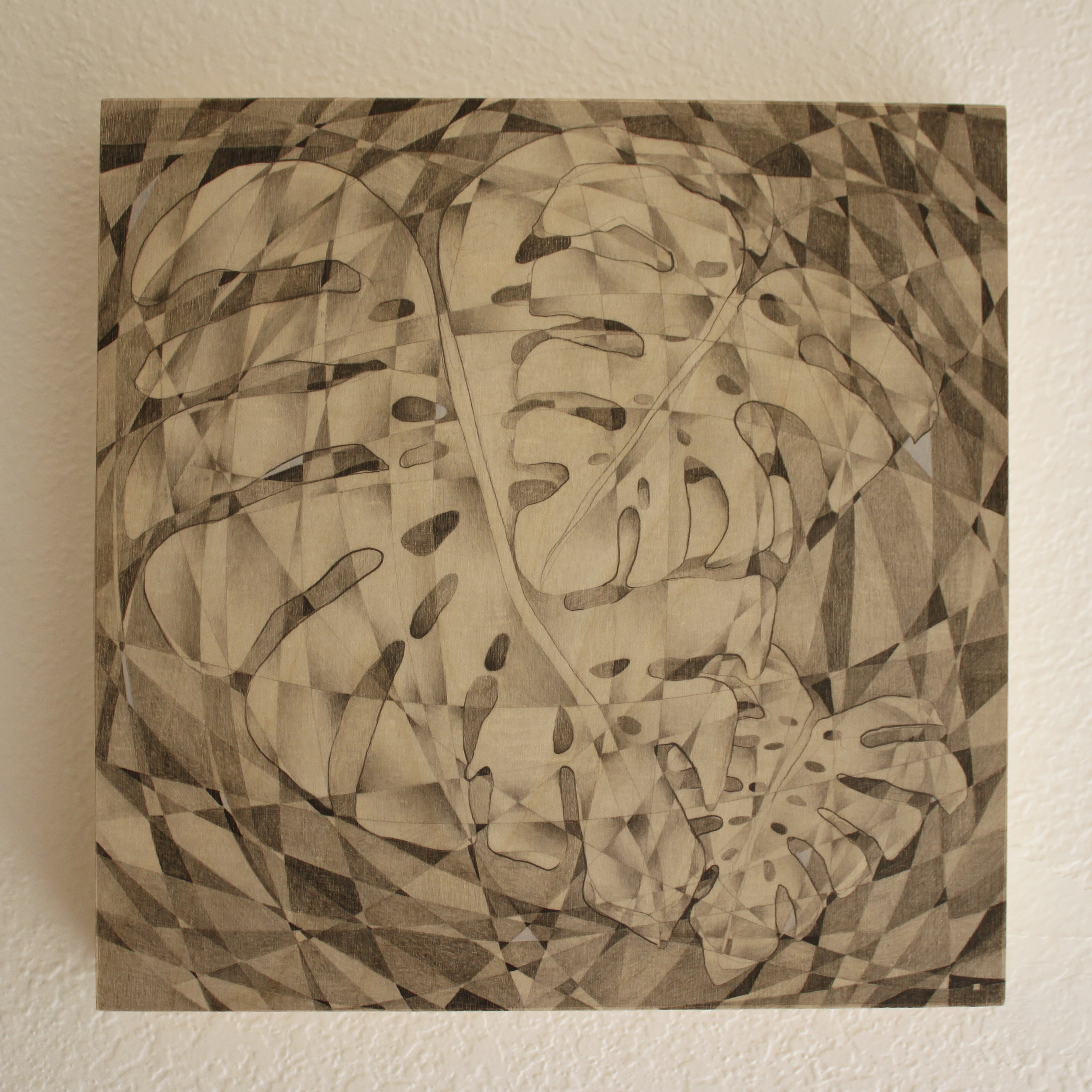 Monstera Deliciosa Pencil on Panel 8in x 8in 2015 Boz Schurr.jpg