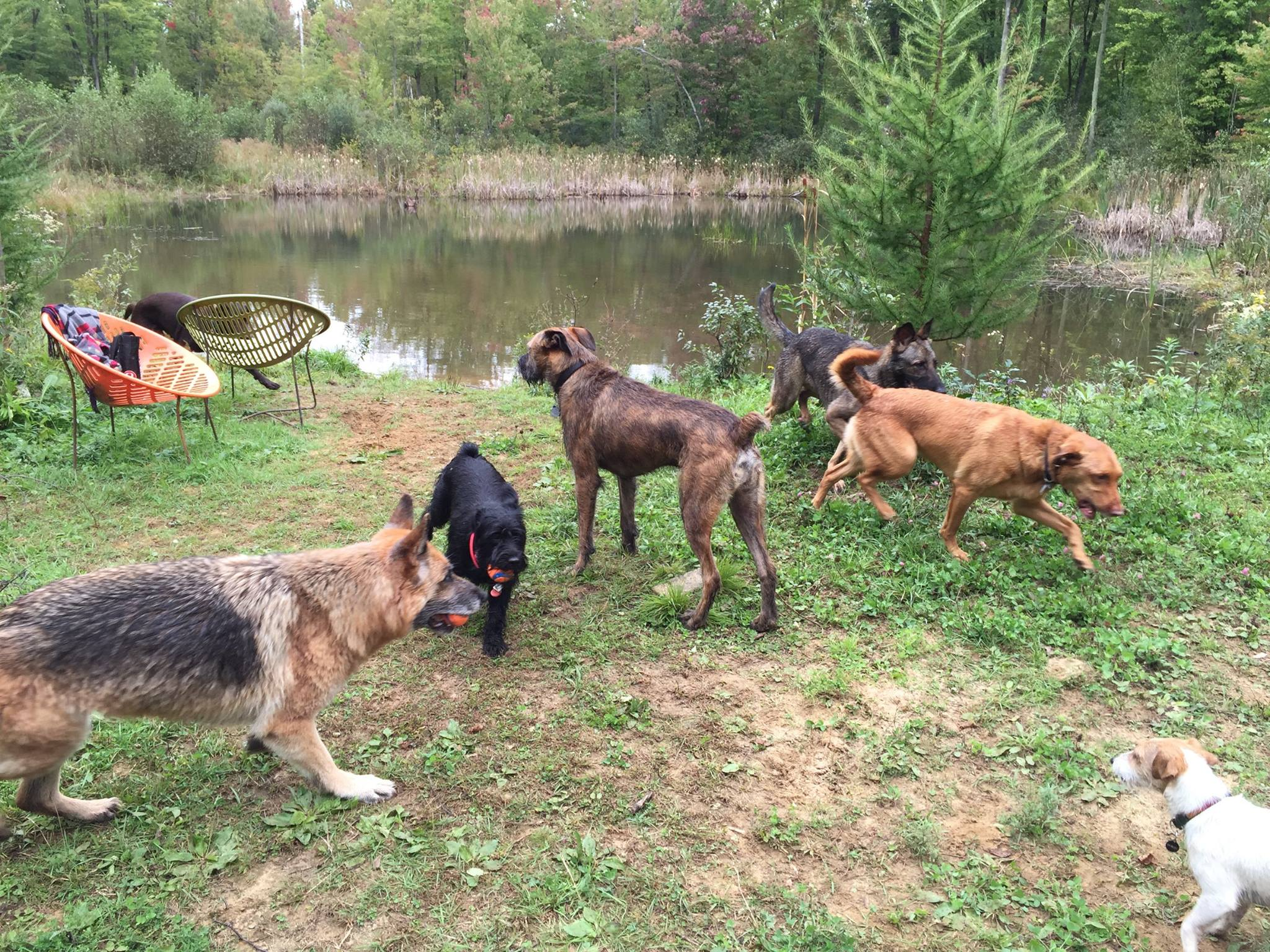Dogs taking a break from training