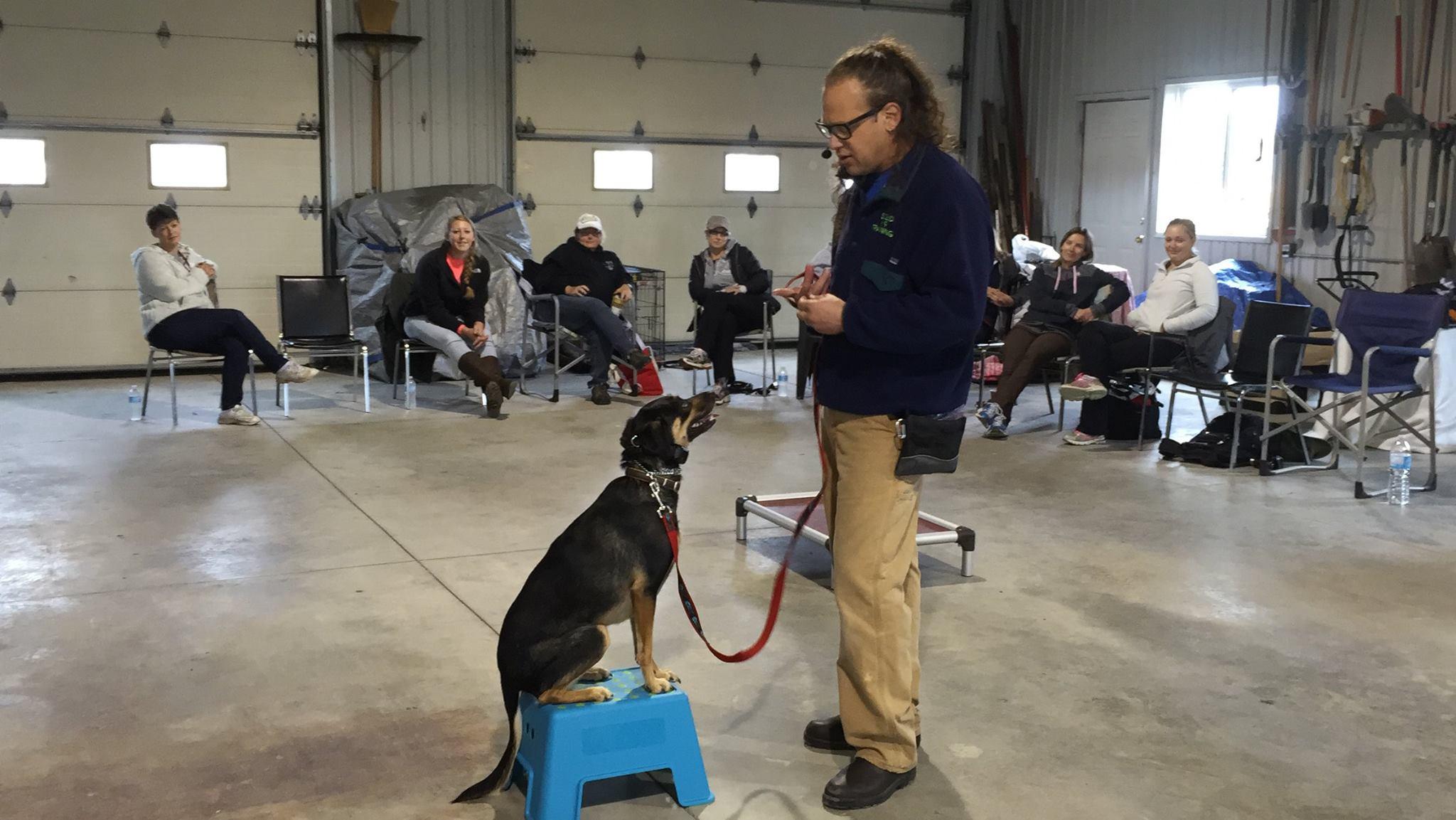 Jeff Gellman training dog