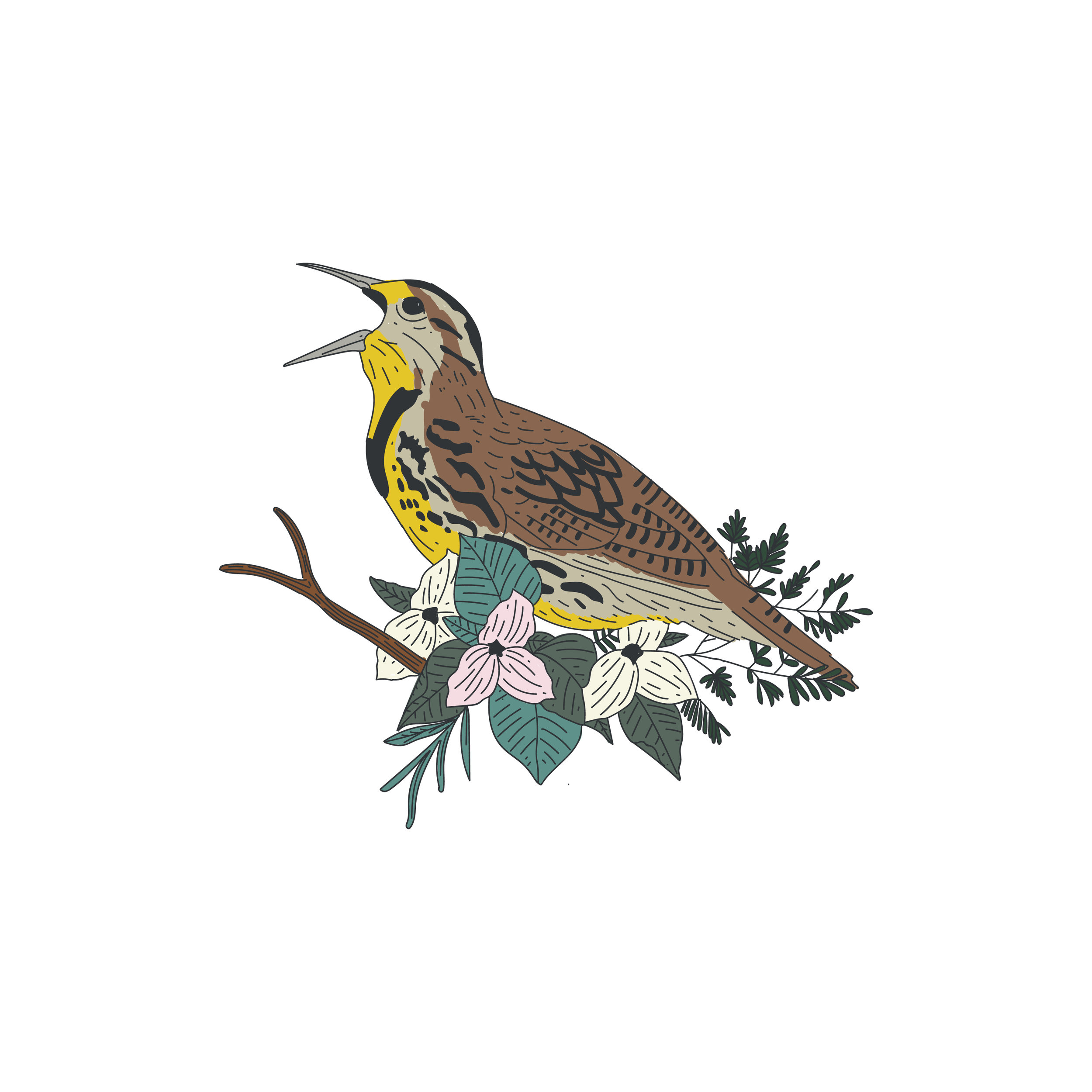 bird illustration-01.jpg