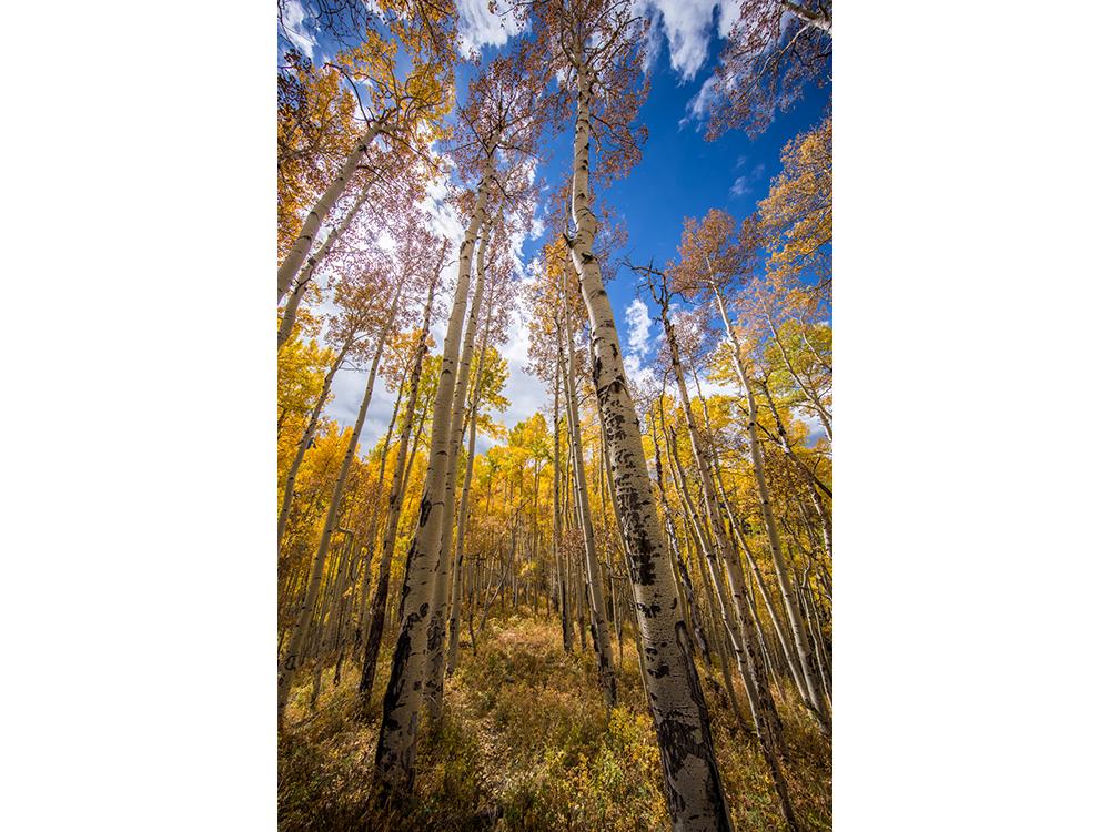 landscape_0007_IMG_1565-HDR.png