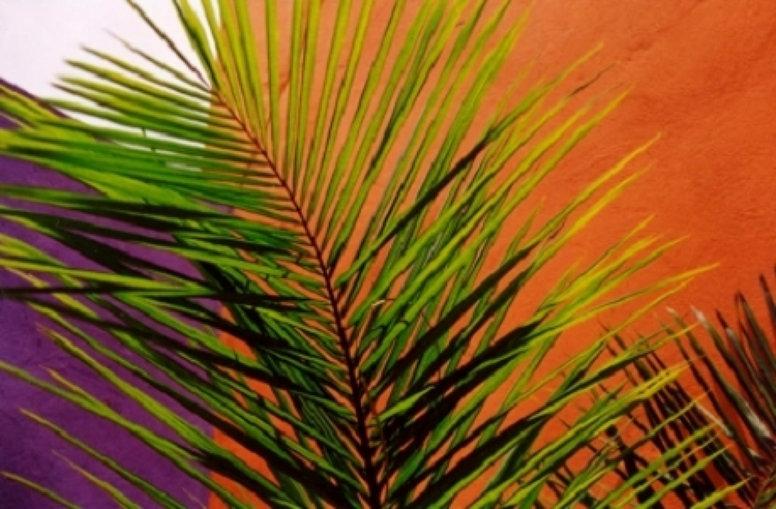 Jamaica III TB Palm Fronds