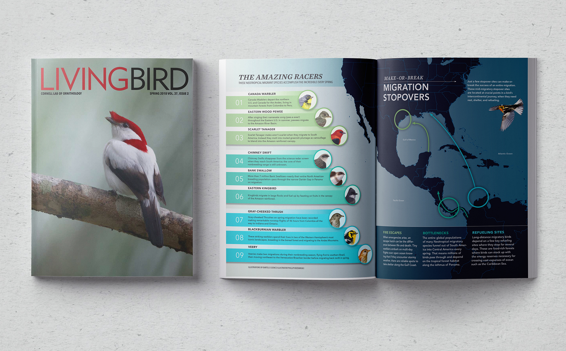 Living Bird Spring Issue 2018