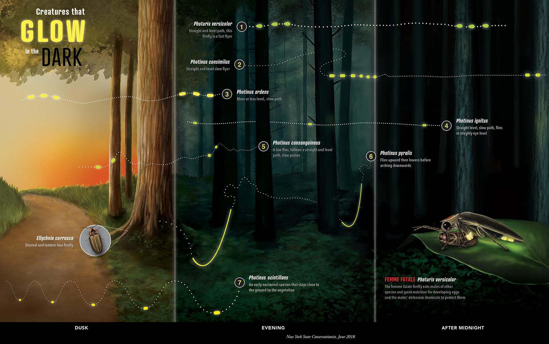 Firefly Flight Pattern Infographic