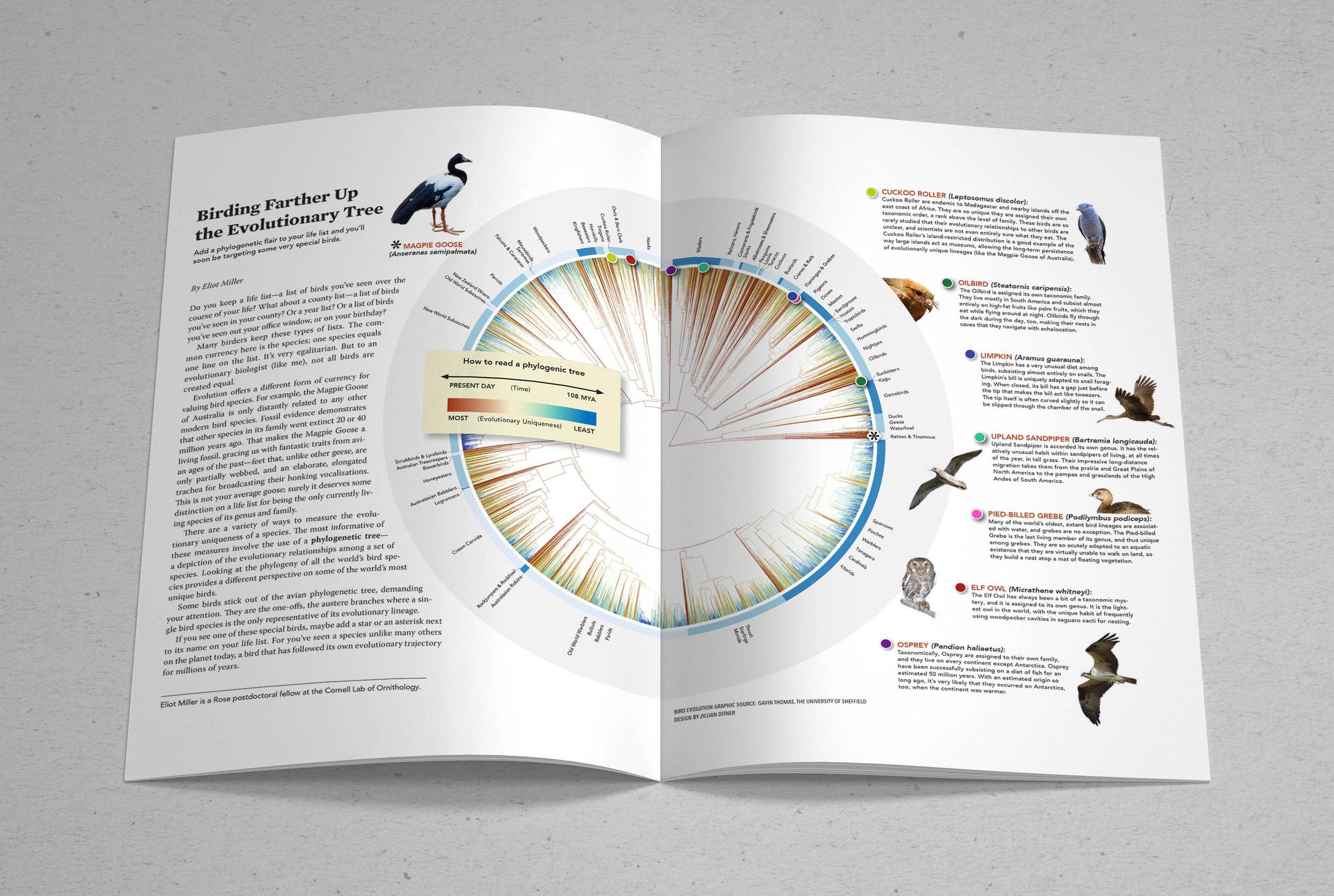 Radial Phylogeny