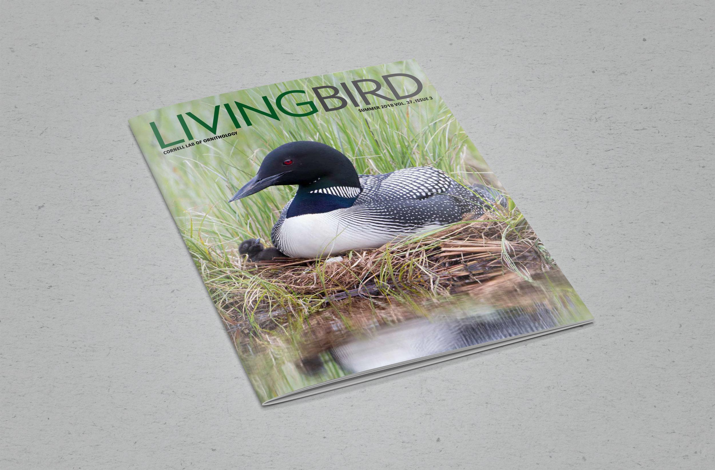 Living Bird Summer 2018