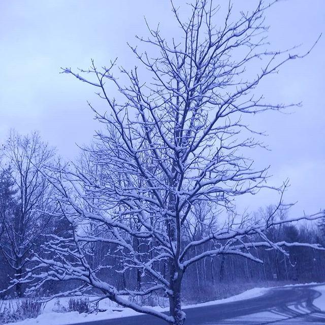 No filter, just really weird end-of-day light  #nofilter #winter #november #snow