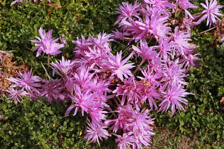 chicago-botanic-garden_22074116859_o.jpg