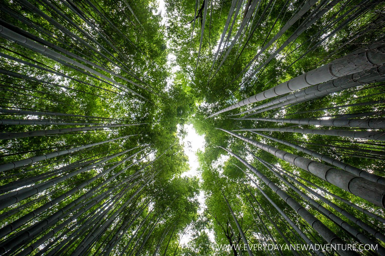 [Squarespace1500] Kyoto-08463-HDR.jpg