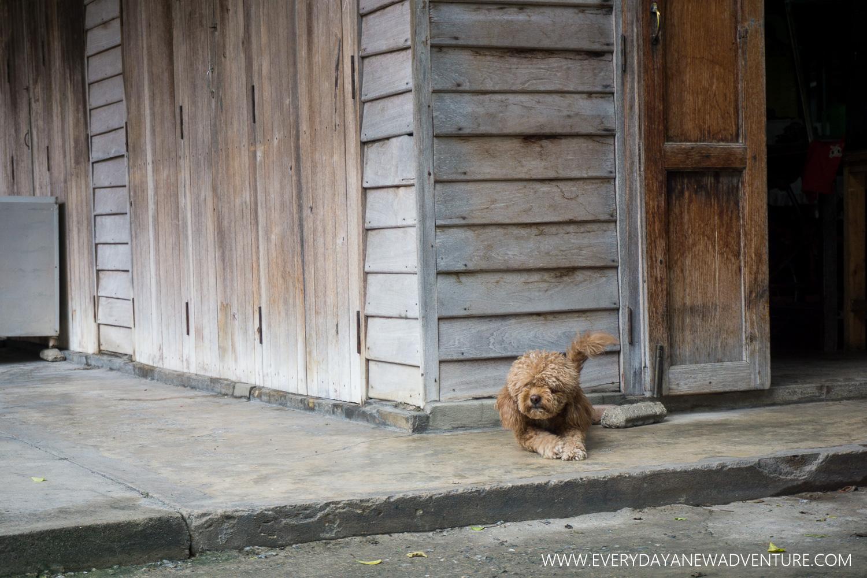 [SqSp1500-077] Chiang Mai-02542.jpg