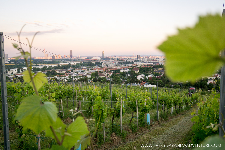 [SqSp1500-038] Vienna-00843.jpg