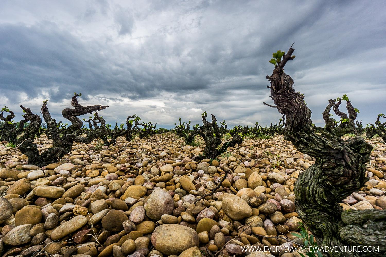 The Famous Rocks of Chataeuneuf du Pape