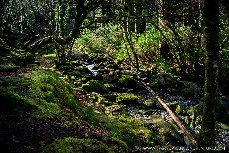 [SqSp1500-023] Another Shade of Green in Ireland.jpg