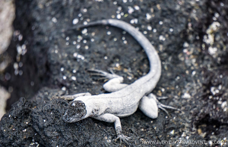 [SqSpGallery-014] Galapagos-438.jpg